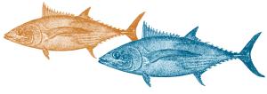 Strategic Plan Fish