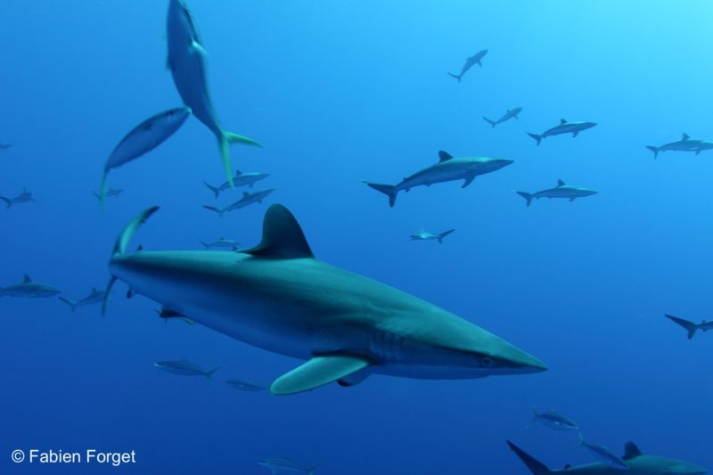 How Can Tropical Tuna Purse-Seine Fisheries Become MSC Certified ...